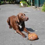 Hof Rodenbeckenschnieder: Hofhund Anton