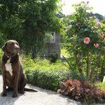 Hof Rodenbeckenschnieder - Hofhund Anton